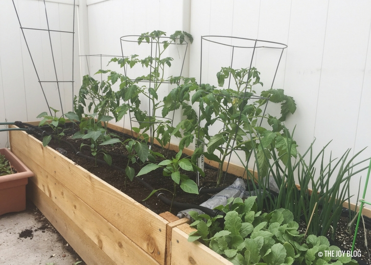 Raised bed vegetable garden // www.thejoyblog.net