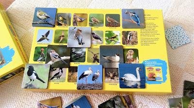 memory ptaki dla dzieci od jakiego wieku