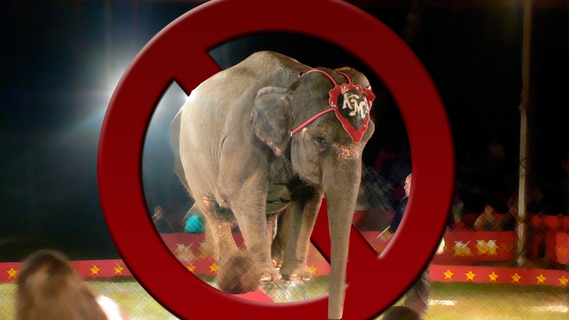 Breaking: Iran Becomes 9th Country To Ban Animal Acts In Circuses