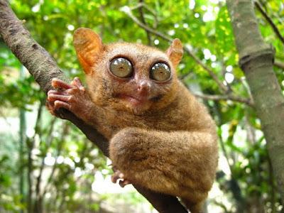 Pengertian Fauna Tipe Oriental, Australis dan Peralihan