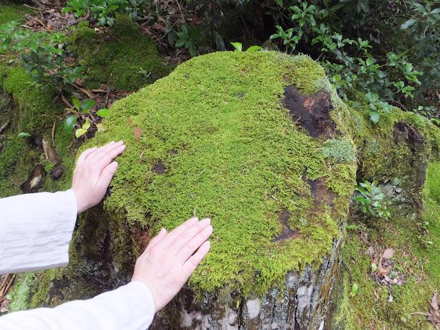 岩にタッチする手の写真