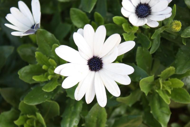 Blumen Im August claretti und die blumen im august