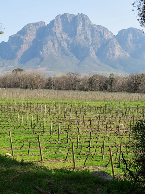 Solms Delta Winery in Franschhoek in South Africa