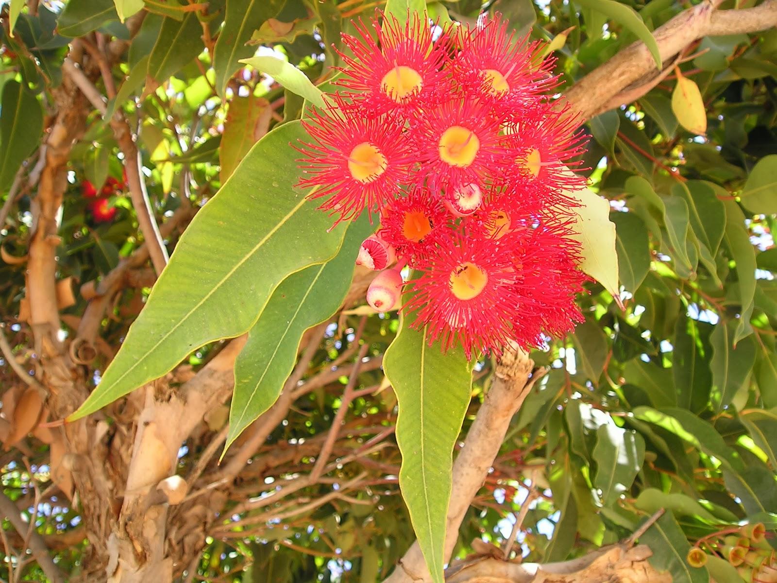 basic gardening tips plus australian native plants  basic gardening tip for australian native plants