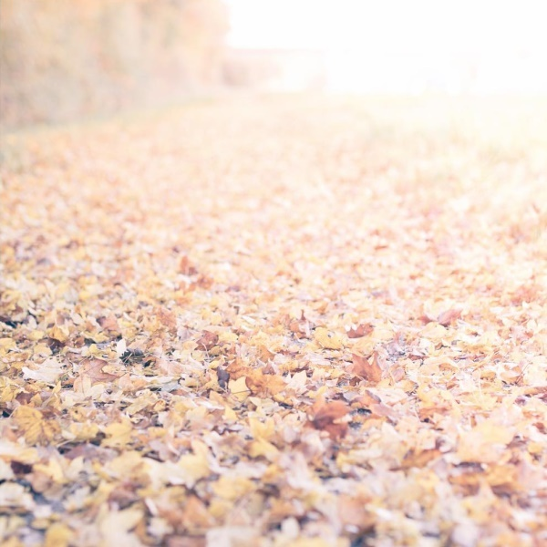 Goldener Herbst by titatoni
