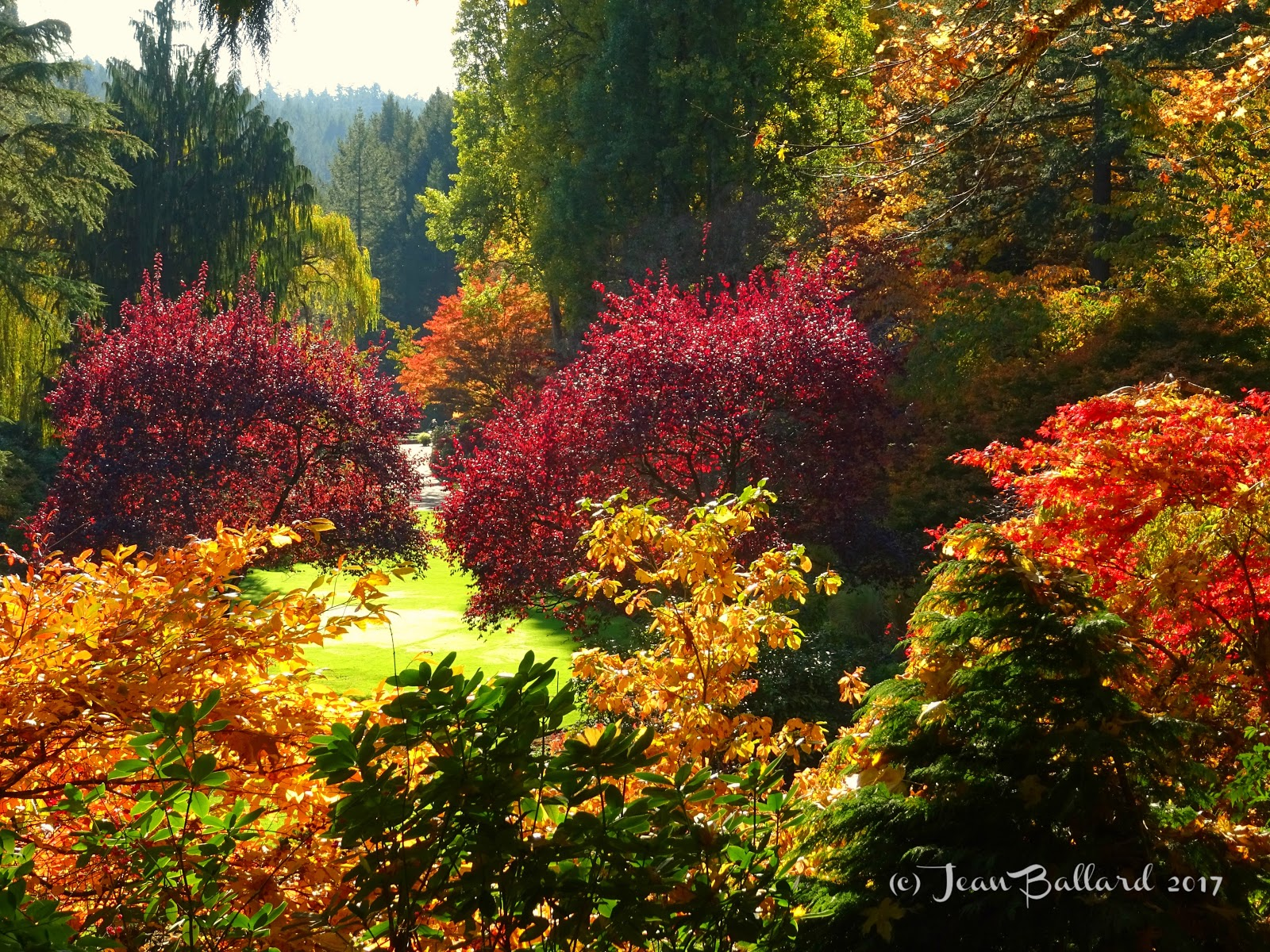 My life with the critters: Butchart Gardens in fall