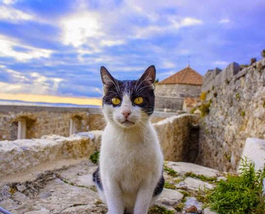 fortress klis croatia