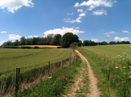Photograph of footpath through the fields on Walk 46: Tewin North Loop