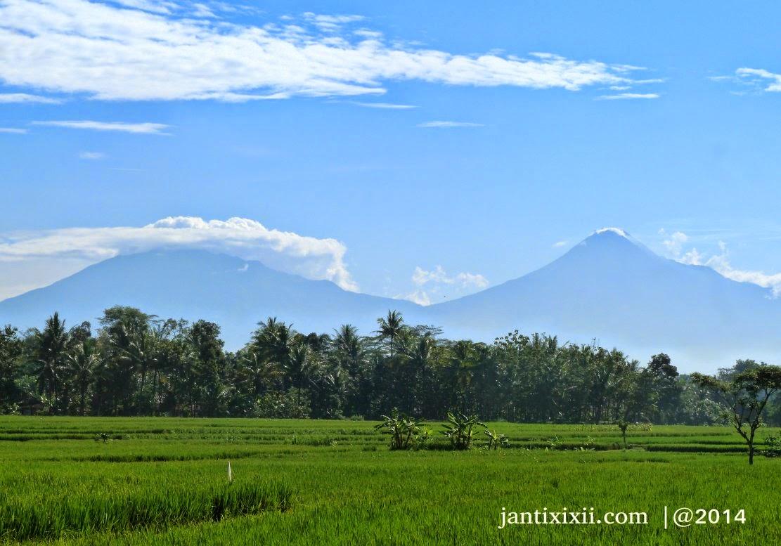 Gunung Merbabu & Merapi dan Sawah Lembah Menoreh, Nanggulan