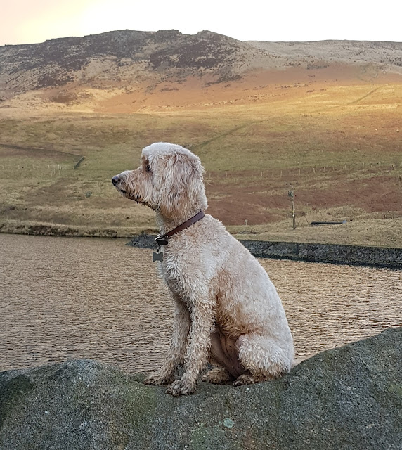 Jessie love to pose for the camera in stunning scenery. cockapoo life