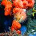 Bastia - roche à homard