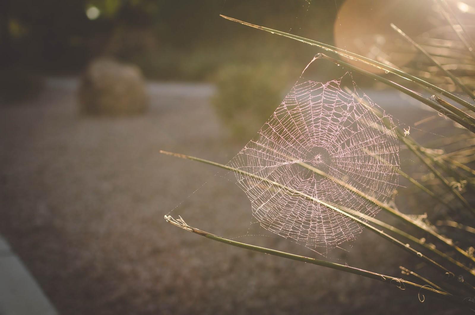 spider web images