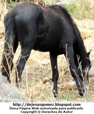 Foto de un caballo comiendo pasto seco por Jesus Gómez