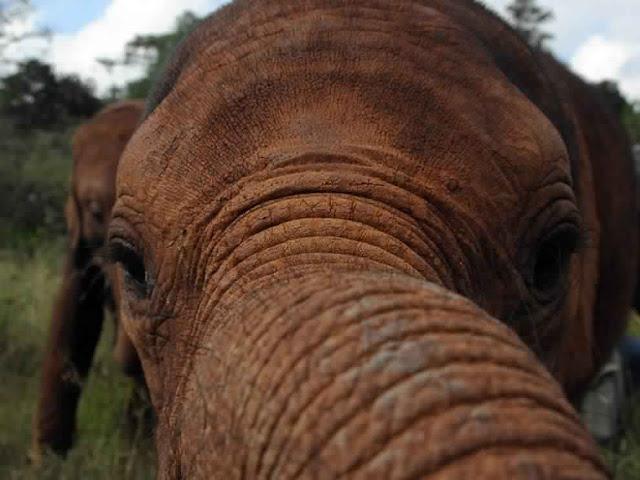 أجمل الصور للحيوانات في الطبيعة 1