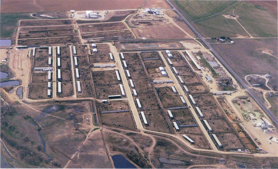 Cow Farms California