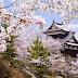 5 Perayaan Jepang Yang Wajib Diketahui