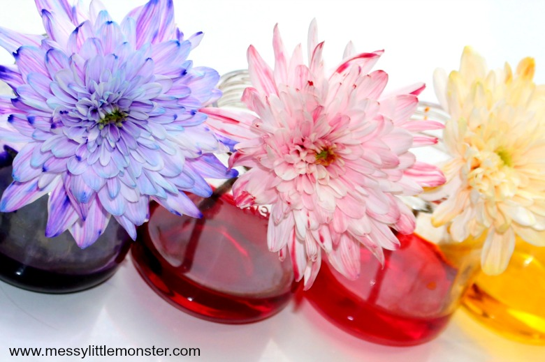 Colour Changing Flowers Science Experiment A Fun Science