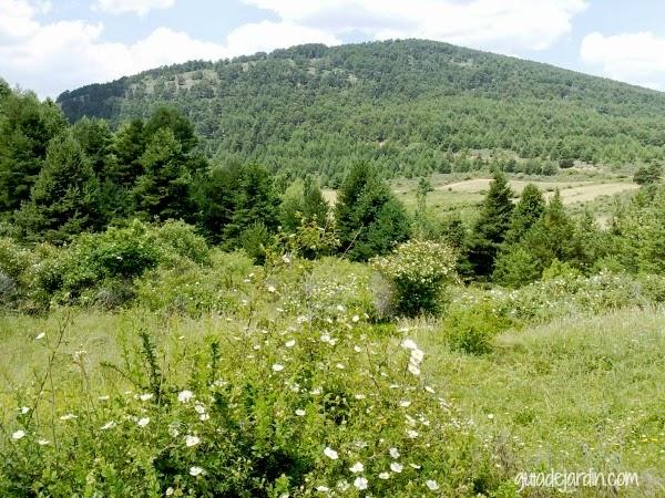 rosales en el monte