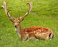 Amazing Deer Facts in Hindi