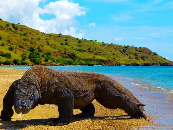 Pulau Komodo | Wisata NTT | Wonderful Indonesia