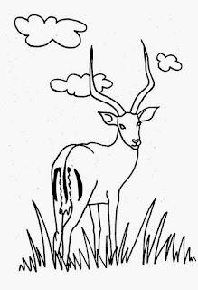 Desenho de veado para colorir