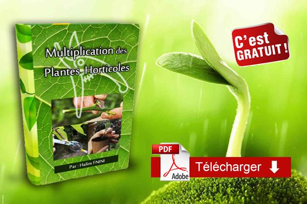 Cours de multiplication des plantes