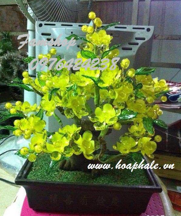 Goc bonsai cay hoa mai tai Hoang Mai