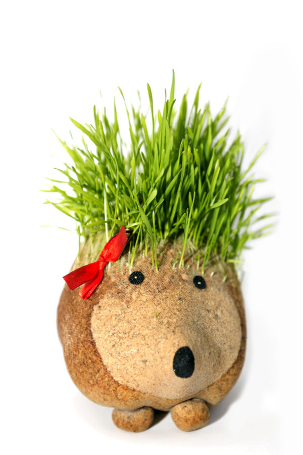 GROW GRASS PETS: Kids love growing grass seed because it is easy to sprout and grows quickly.  These growing grass heads are super fun for spring & kids can even style their plant person's hair! #grassheadsforkids #grassheads #grassheadcraft #grasshaircupskids #kidsgardencrafts #springcrafts #gardeningforkidspreschool