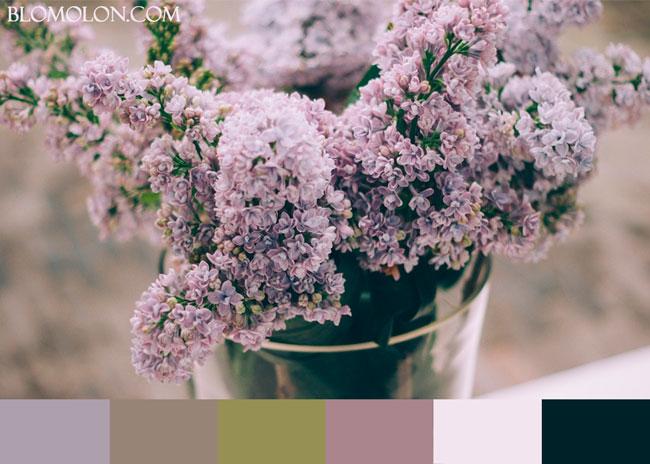 paletas-de-colores-del-mes-de-noviembre-1