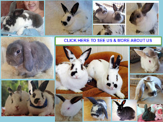 Photos of Tweed Heads Rabbits
