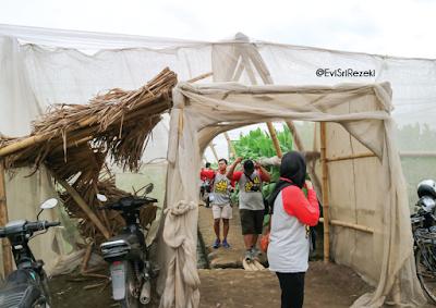 Jelajah Tembakau I: Budidaya Perkebunan Tembakau di Ajung, Kabupaten Jember