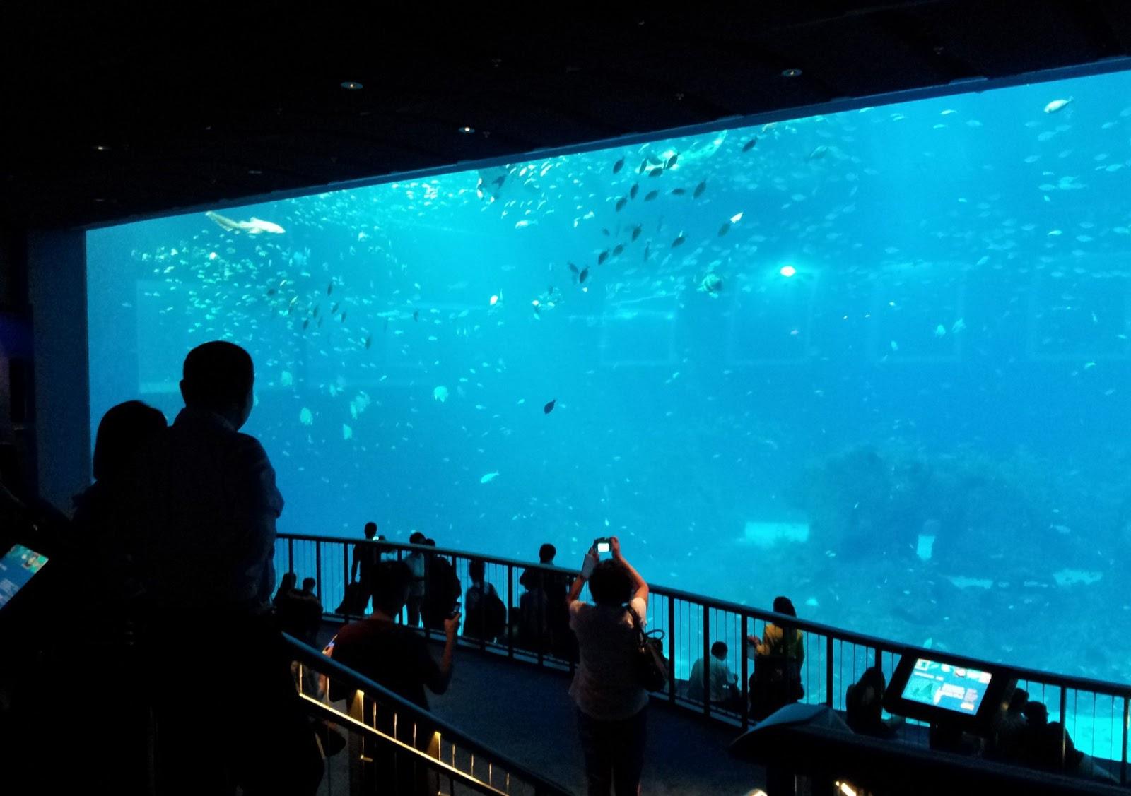 Open Ocean, S.E.A. Aquarium