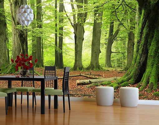 skogtapet fototapet trädstammar