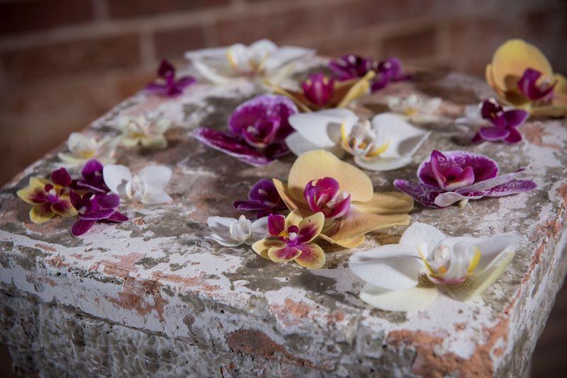 cultivo de orquídeas en el Reino Unido