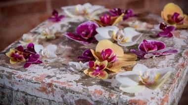 El cultivo de orquídeas en el Reino Unido y la Royal Horticultural Society