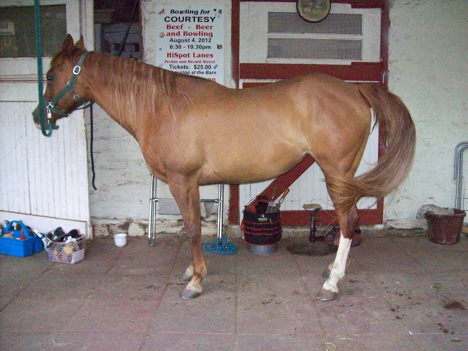 Horse Lame After New Shoes