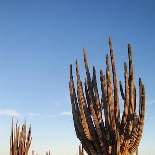 De viajeros por Baja California 4