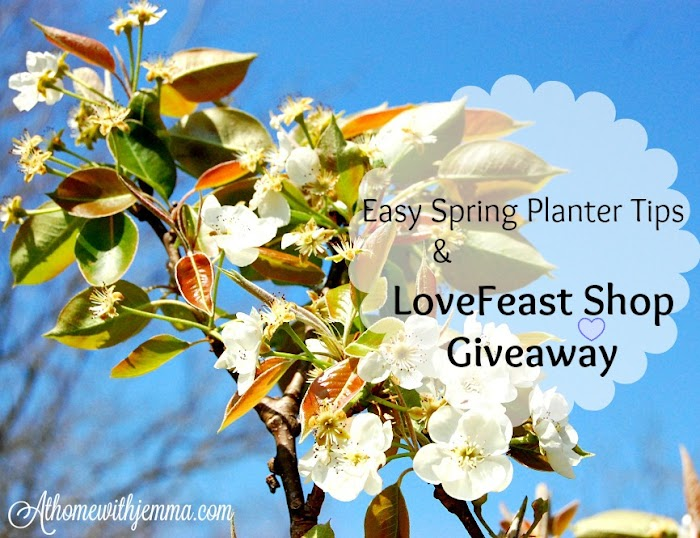 Easy Spring Planter Tips & LoveFeast Shop Giveaway