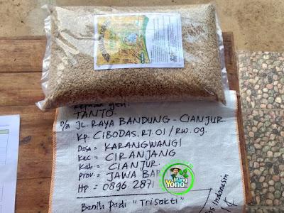 Benih pesana    TANTO Cianjur, Jabar  (Sebelum Packing)