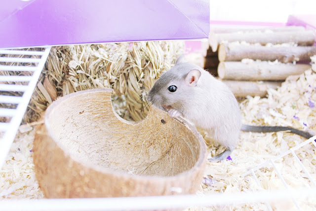 Tropical Moana themed gerbil home