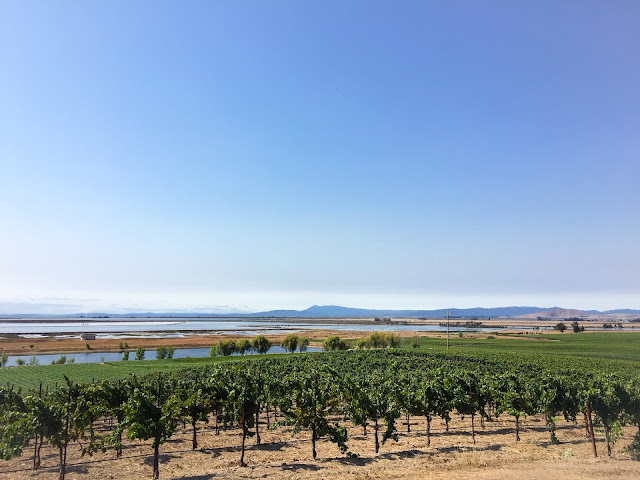 Bouchaine Vineyards, Carneros