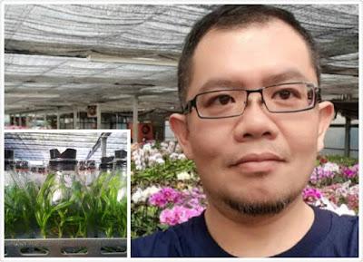 培育台灣蘭苗