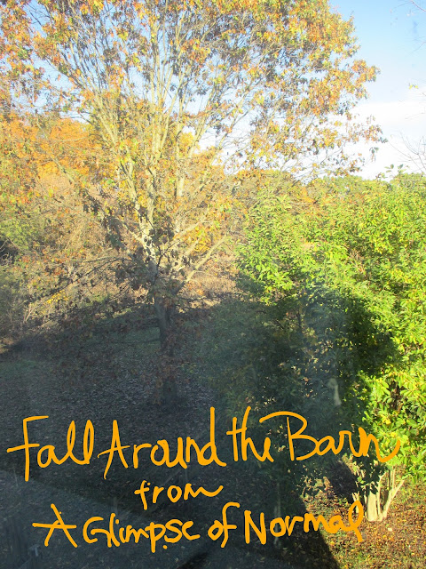 A Glimpse of Normal Blog, Fall Around the Barn, Fall, Barn, Pictures