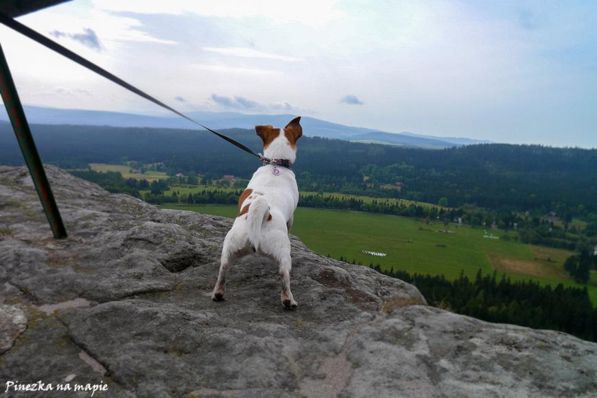 pies na szczelińcu