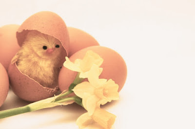 chick eggshell%2Bcopy - Happy Easter 2017 Greetings   pictures   images