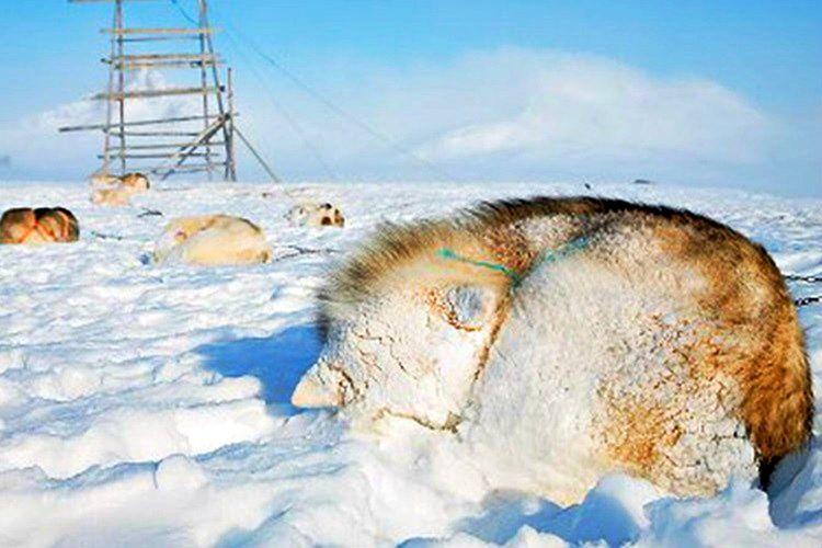 Yolculukları sırasında kar fırtınasına denk geldiler, fırtına yüzünden neredeyse donarak ölüyorlardı.