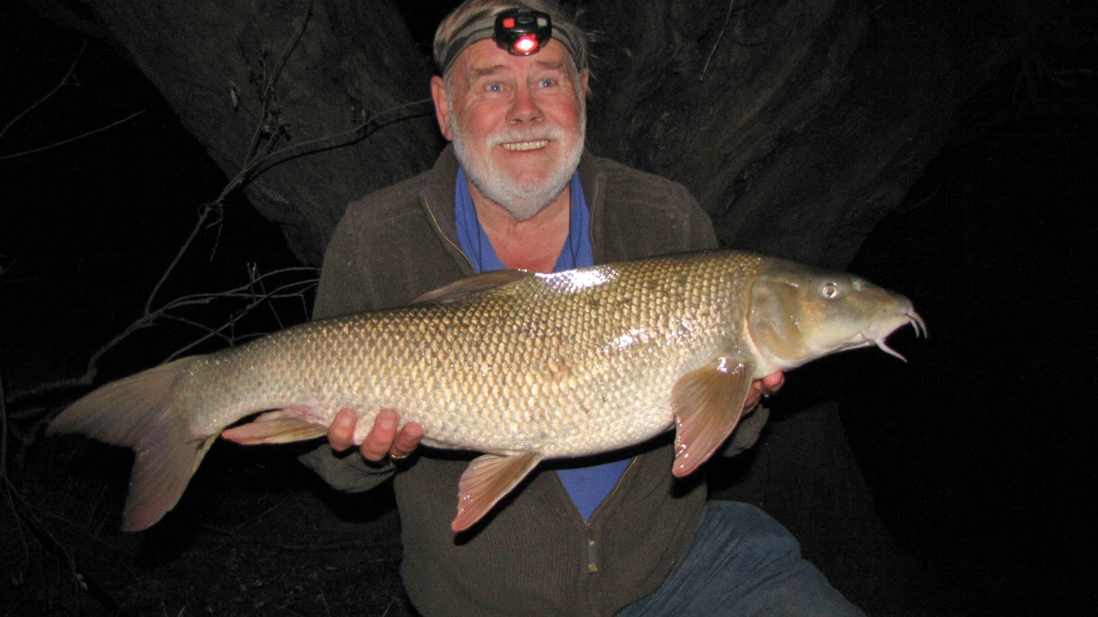 Travelling Man Two Monster Barbel In A Week September 6 Kg Then When I Lifted It After Its Usual Rest Period The Landing Net Was Even More Surprised Again This Very Big