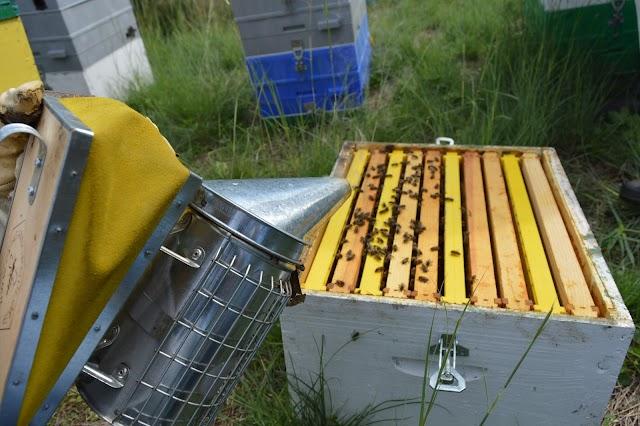Παλιός μελισσοκόμος εξασφαλίζει μηδενικές απώλειες στο ξεχειμώνιασμα. Πως το κάνει άραγε;