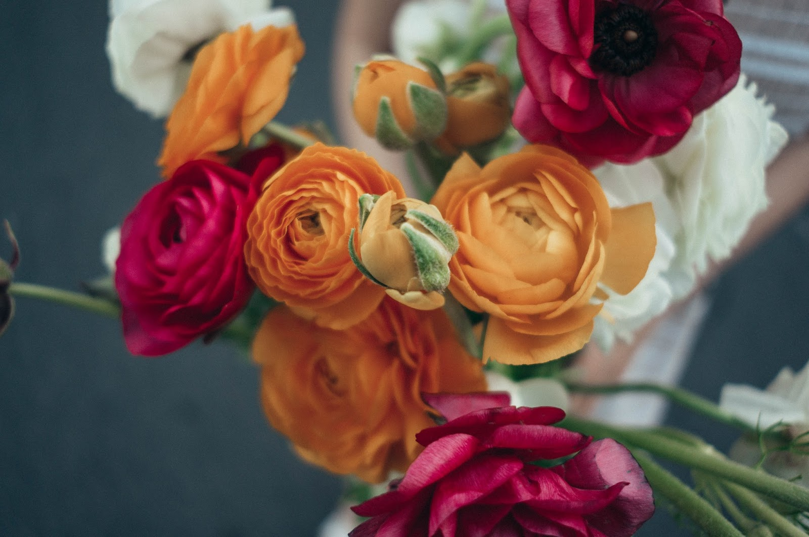 Ranunculus Flower Blooms