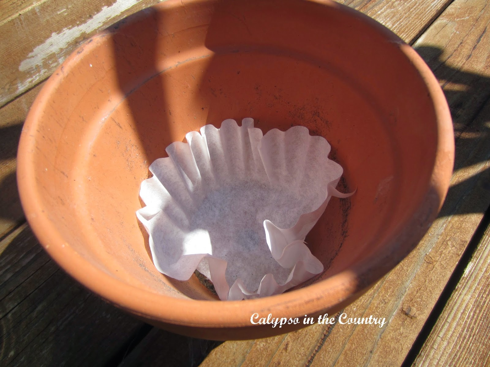 Coffee Filters in flower pot - Helpful Tips for Container Gardening